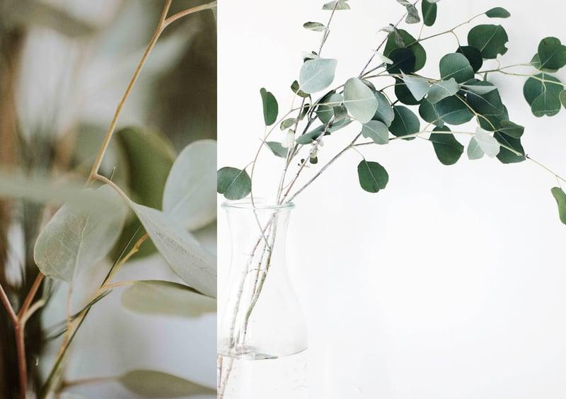 eucalyptustakken in je badkamer
