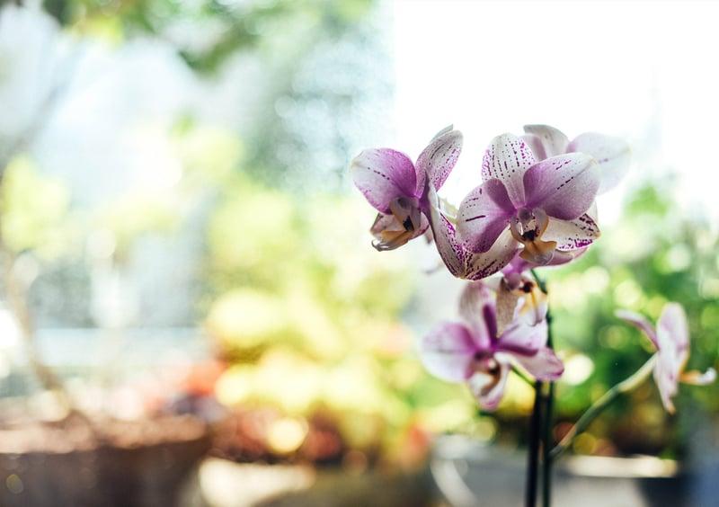 orchidee in je badkamer