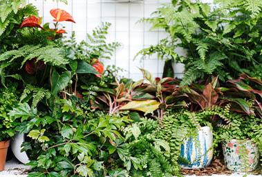 Planten in je badkamer tegel